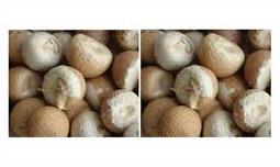 betel nut shell
